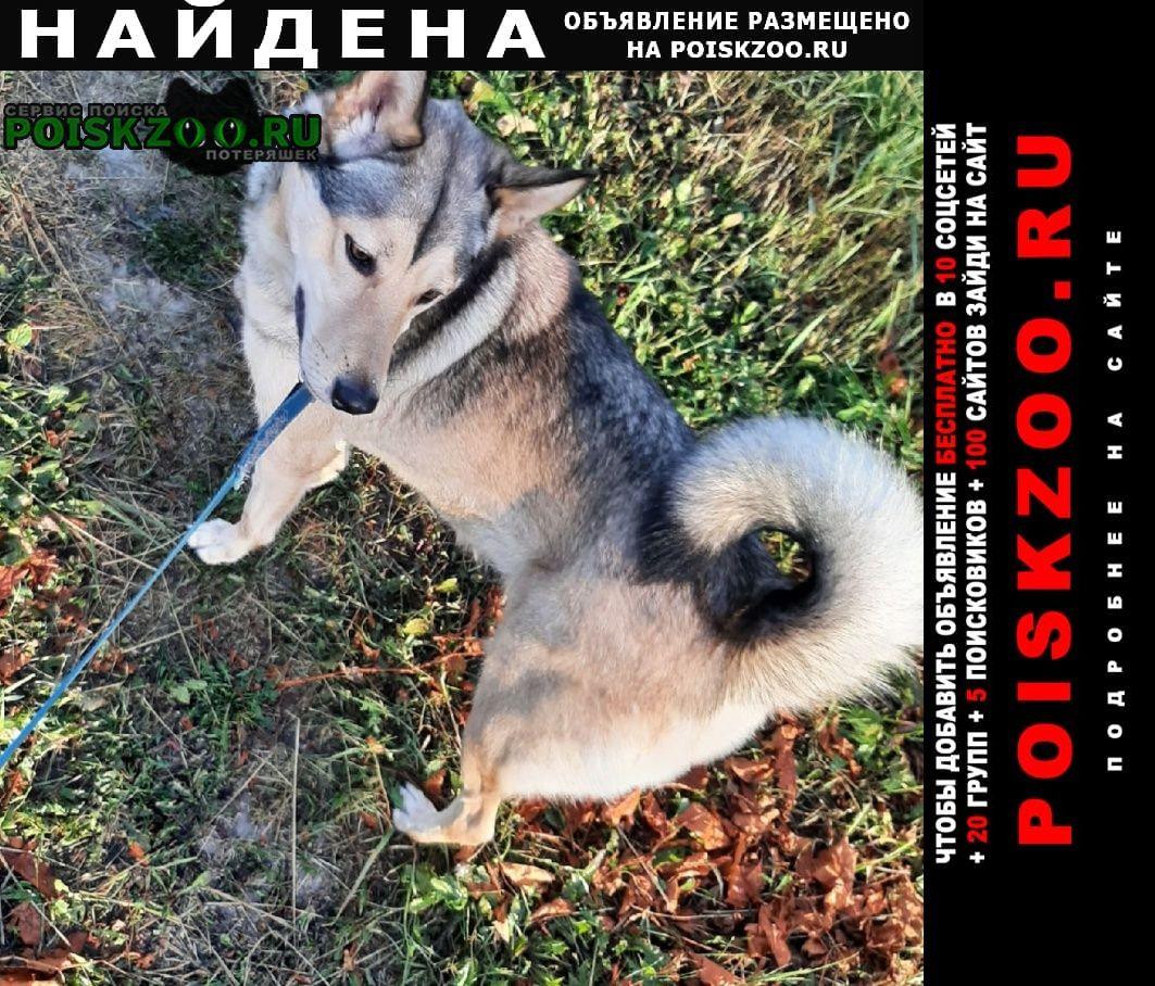 Найдена собака лайка близкий метис Мытищи