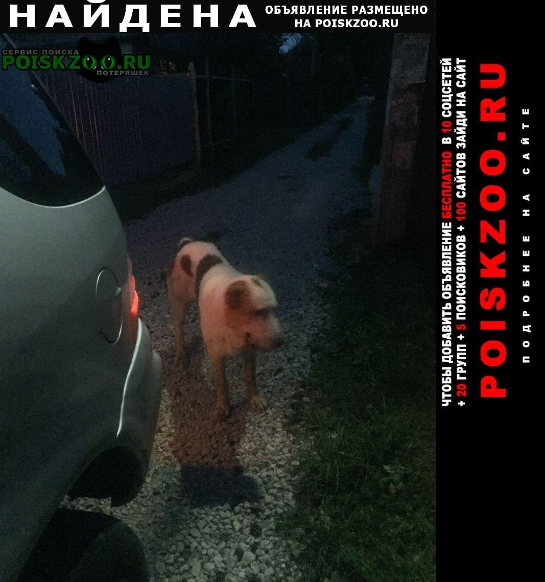 Найдена собака молодая девочка породы алабай. Тула