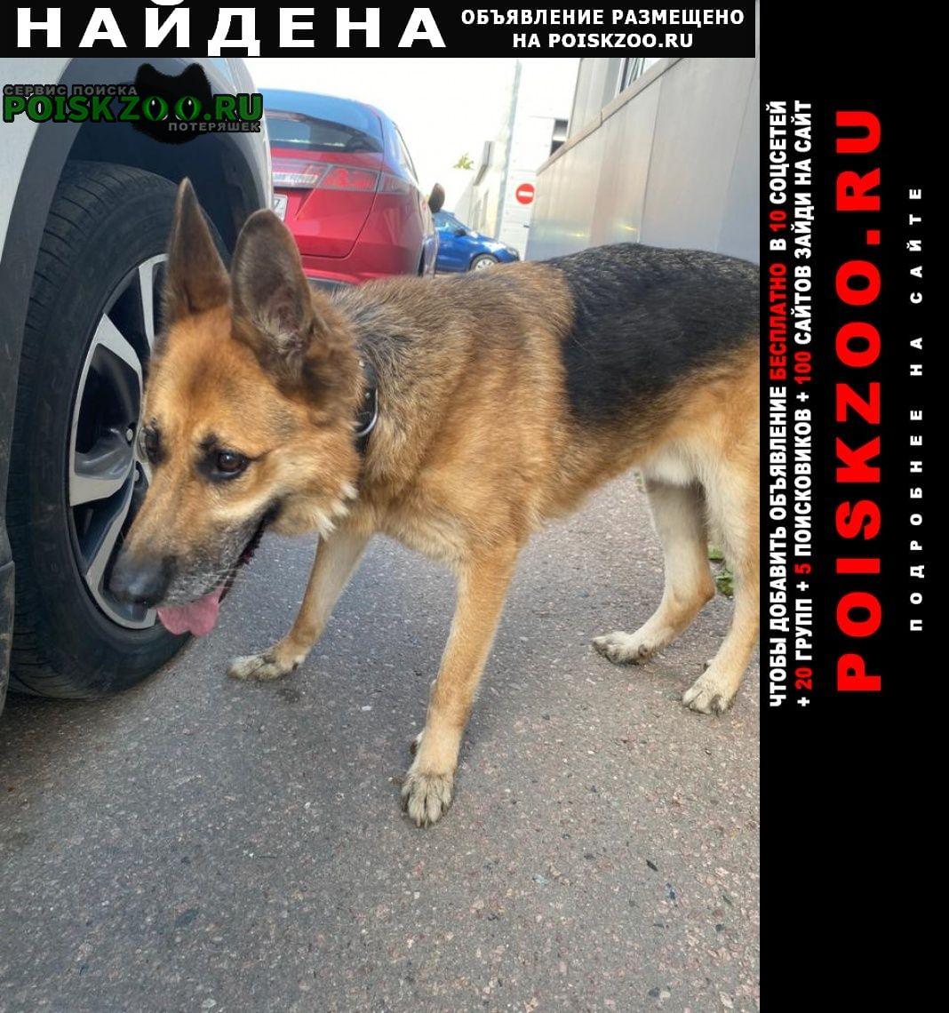 Найдена собака кобель овчарка с коричневым ошейником Москва