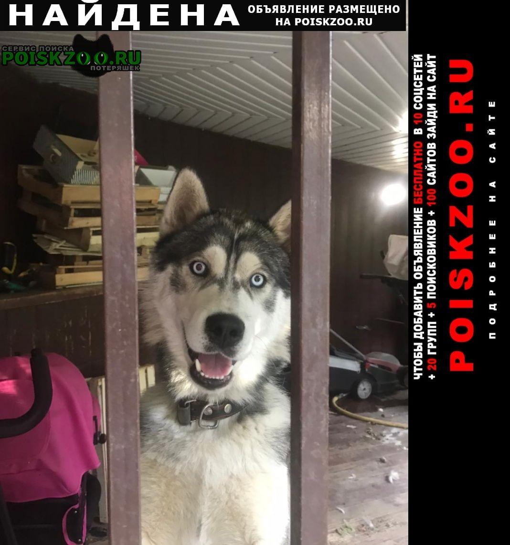 Найдена собака кобель сибирский хаски Москва