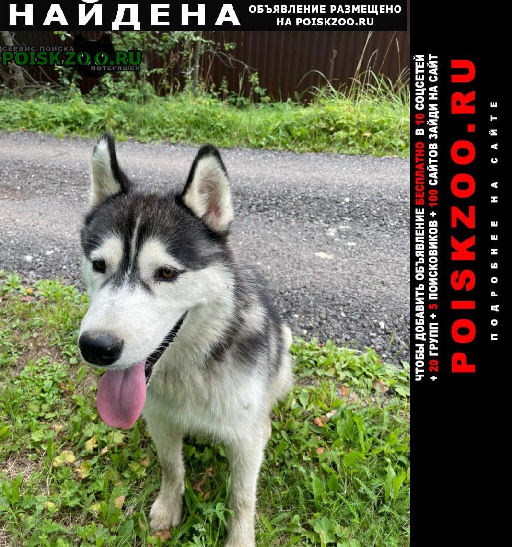 Найдена собака кобель сибирский хаски, мальчик серо-бел Дмитров