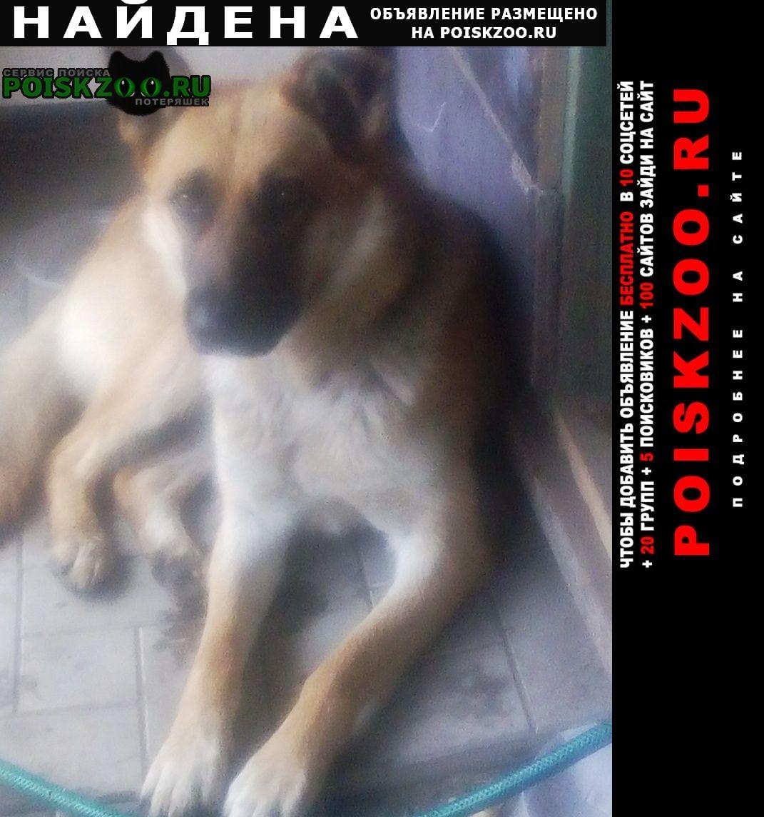 Найдена собака кобель кабель Новосибирск
