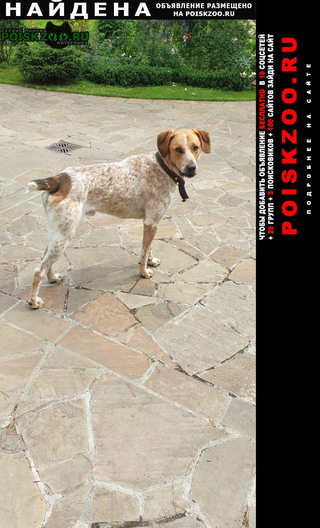 Найдена собака кобель Раменское