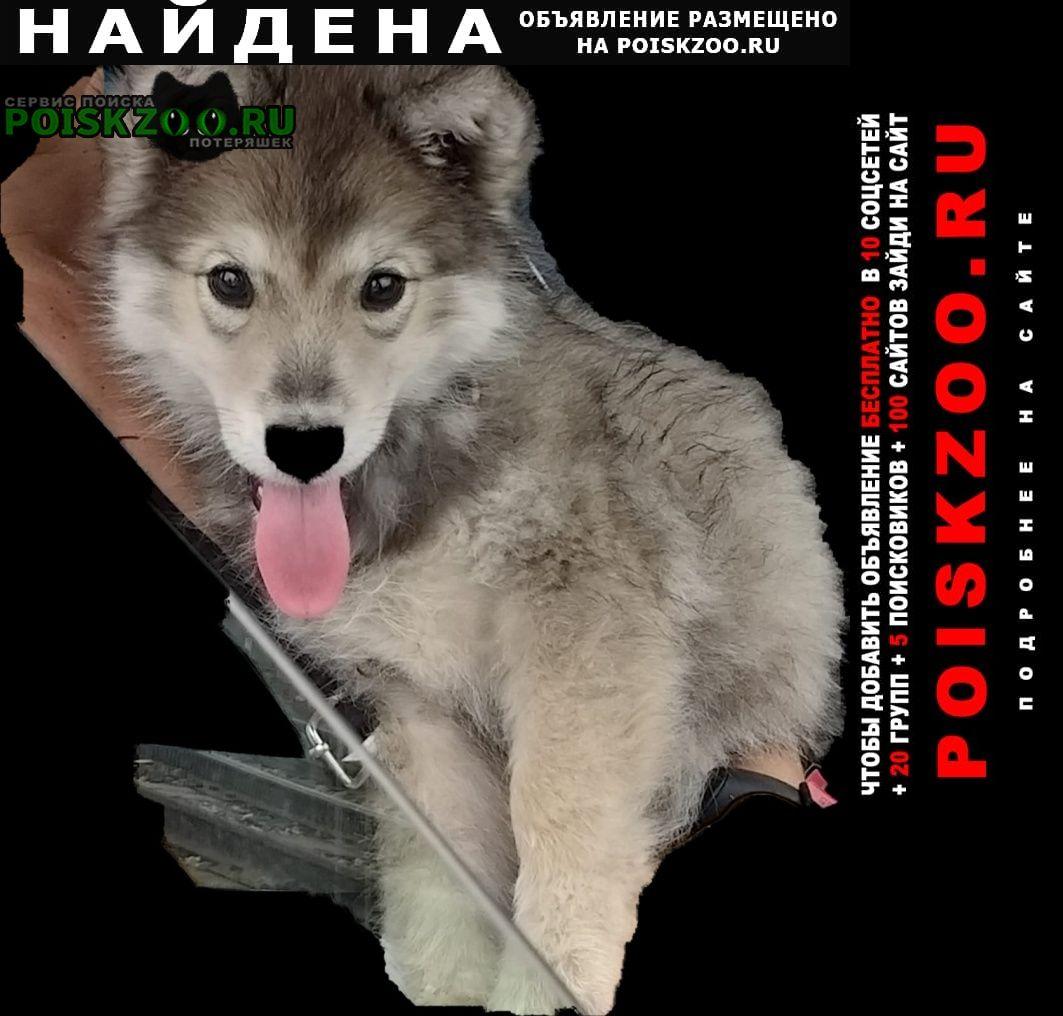 Найдена собака Нижнекамск