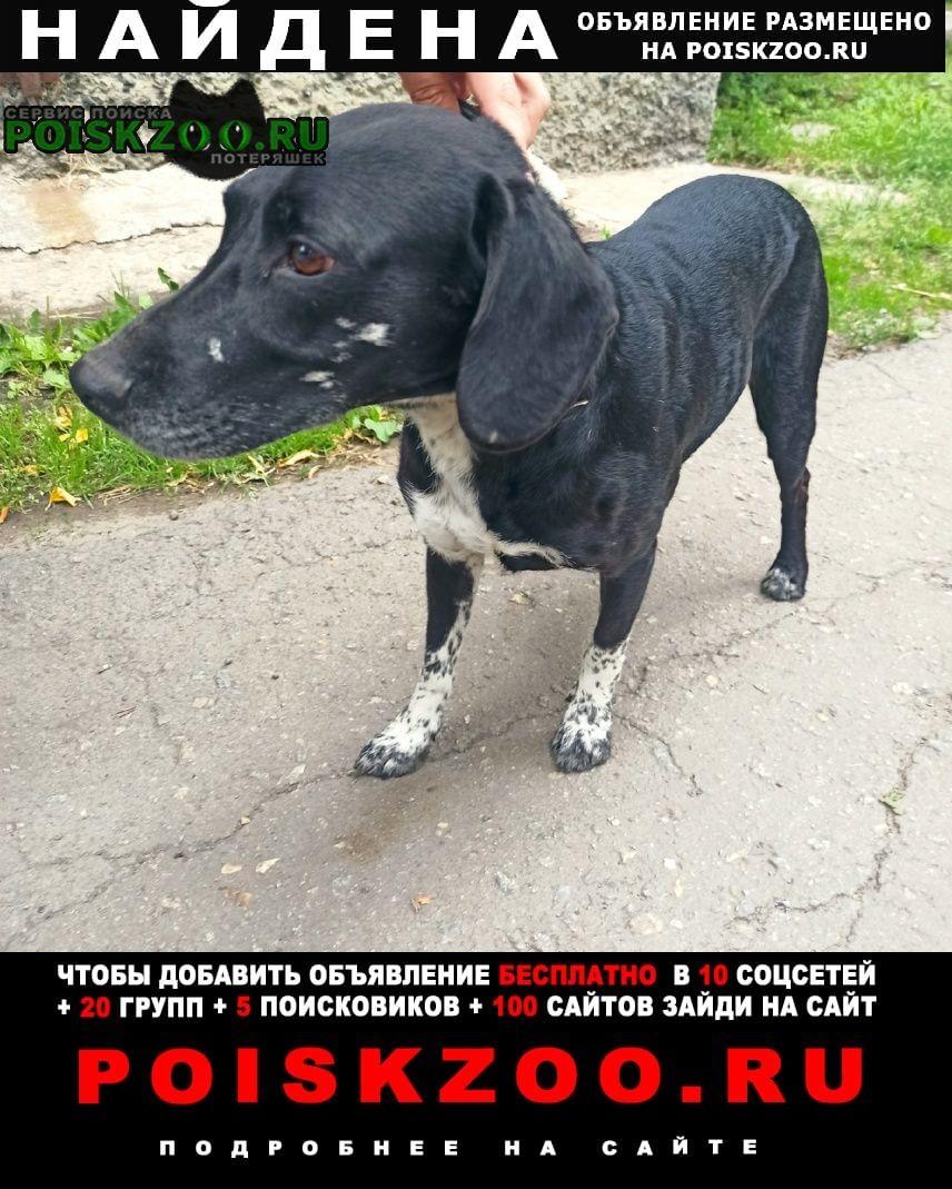 Найдена собака кобель мальчик черного цвета Челябинск