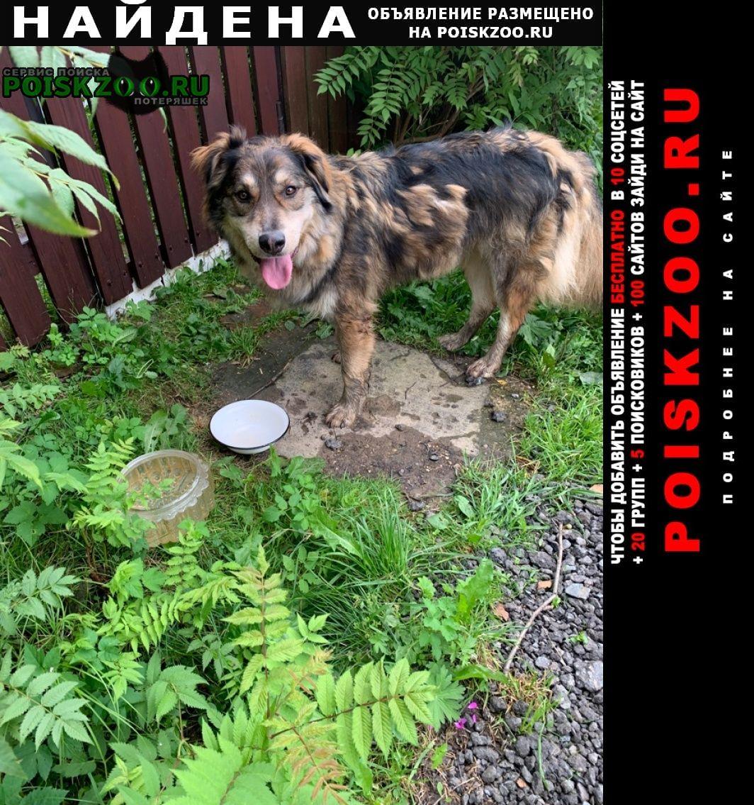 Найдена собака кобель Абрамцево