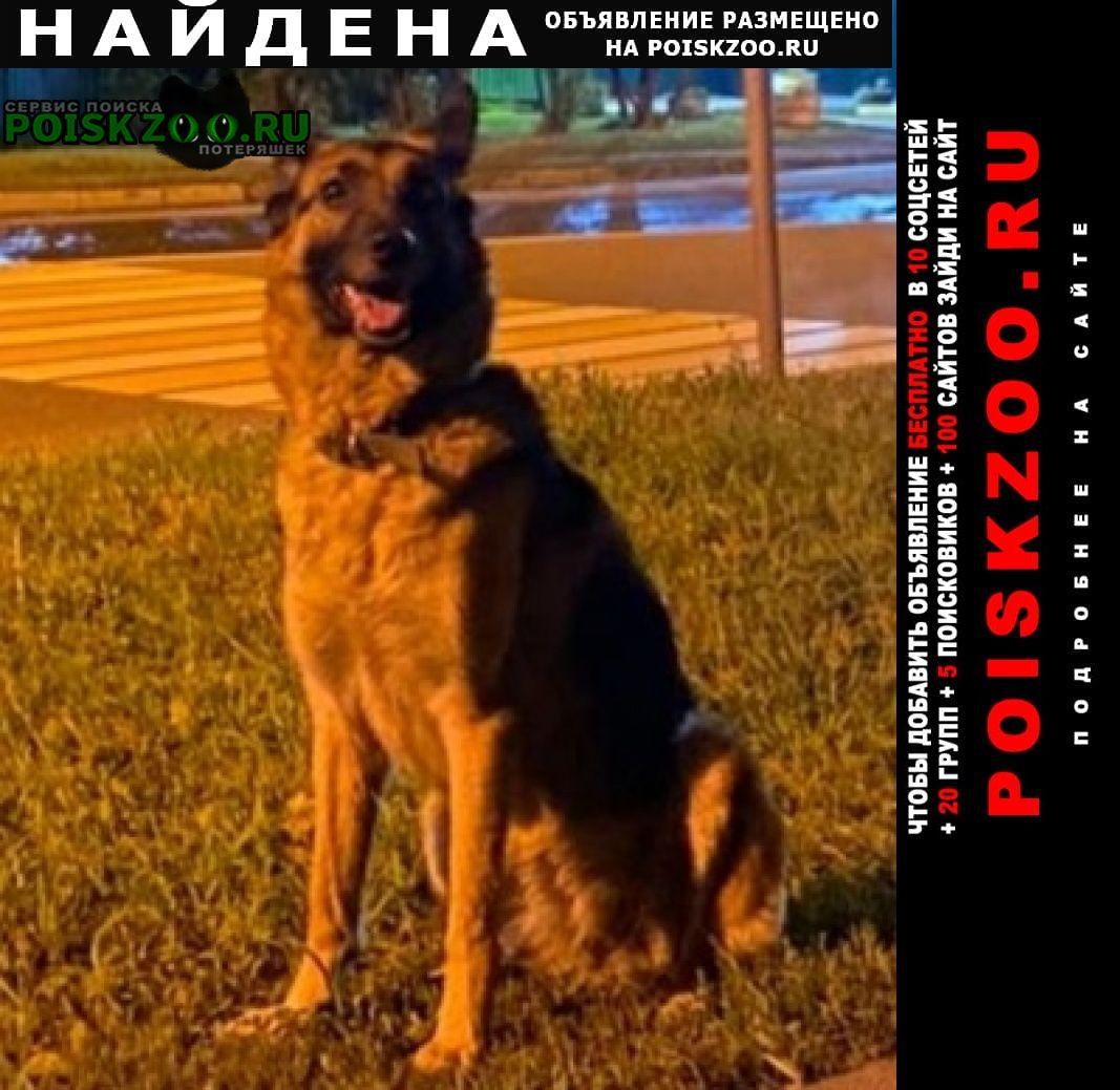Найдена собака овчарка Москва