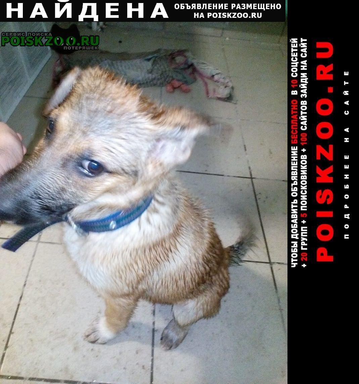 Найдена собака район большая медведица. Хабаровск