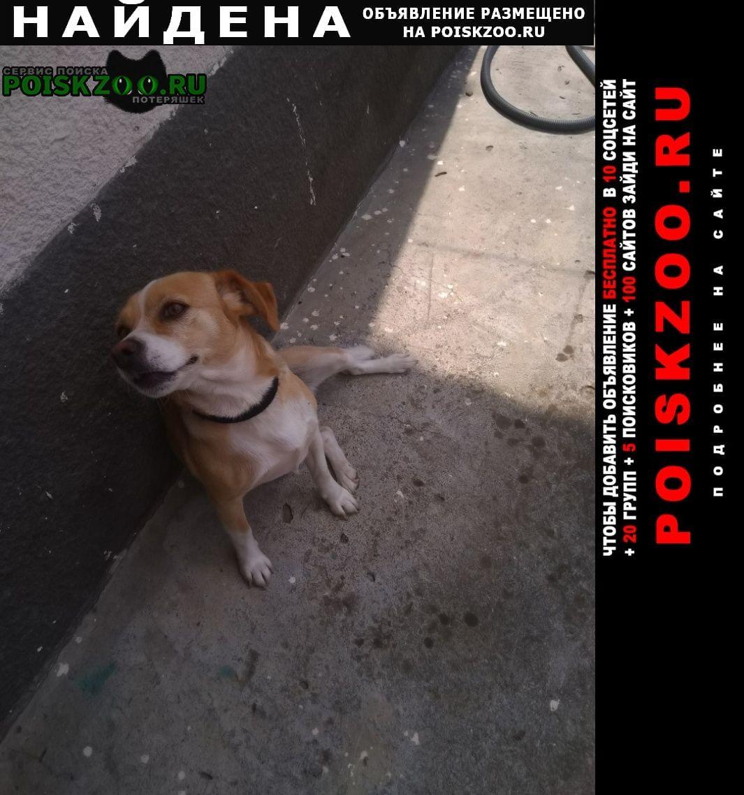 Найдена собака Адлер