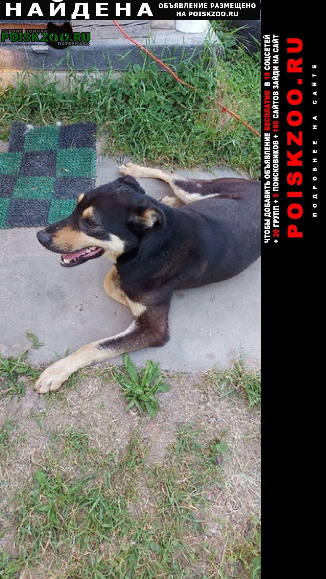 Найдена собака кобель Медынь