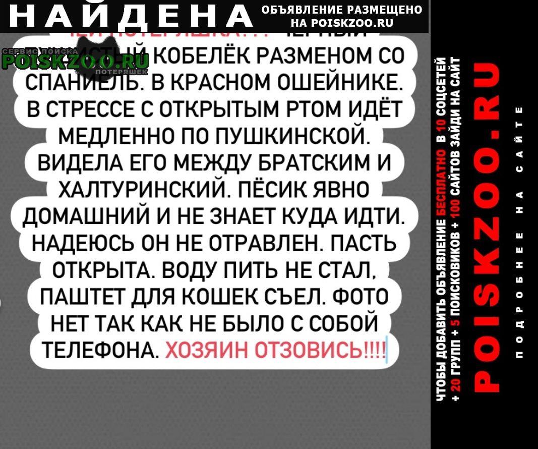 Найдена собака кобель Ростов-на-Дону
