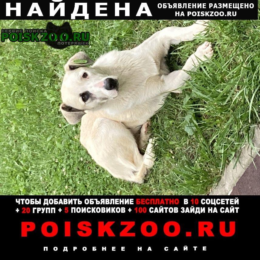 Найдена собака с чипом на ухе Москва