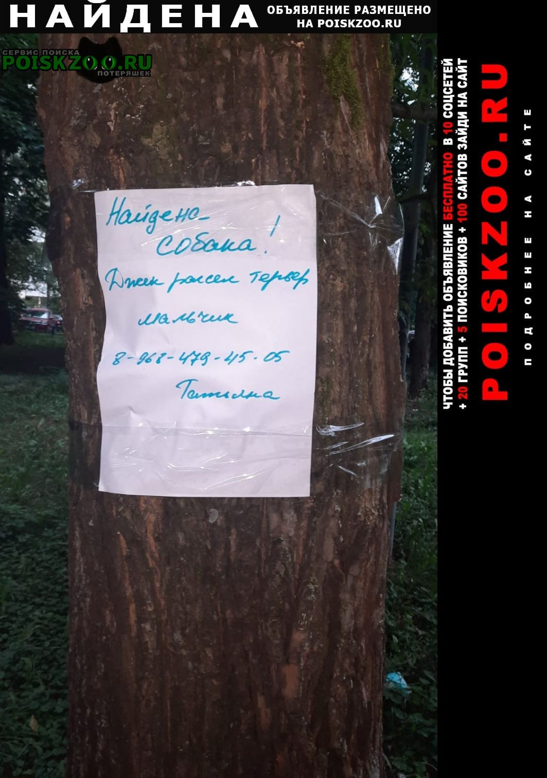 Найдена собака кобель район левобережный Москва