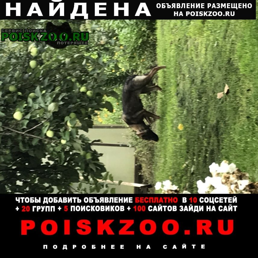 Найдена собака молодая собак-дворняга Александров
