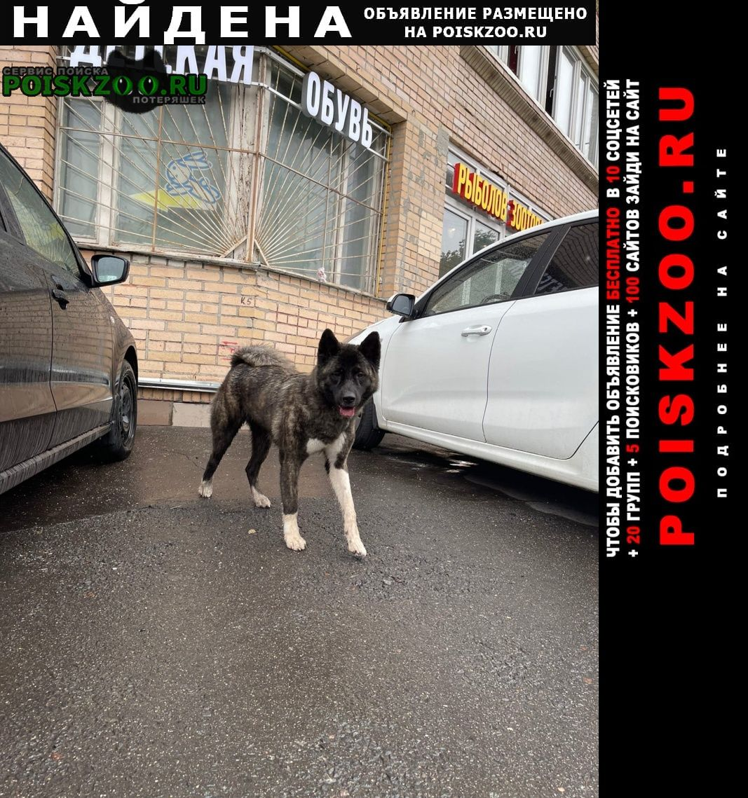 Найдена собака бескудниковский бульвар Москва