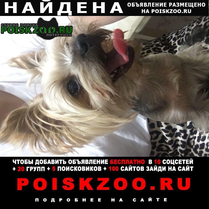 Найдена собака кобель йорк миник Оренбург