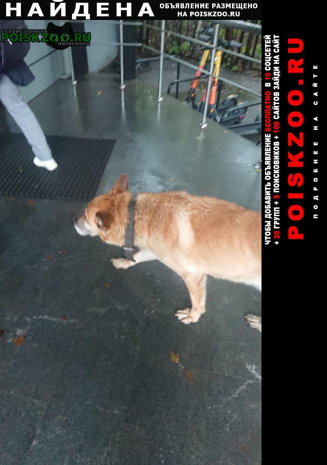 Найдена собака у м. нагорная Москва
