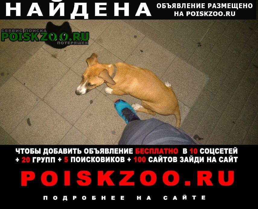 Найдена собака, нарзанная галерея Кисловодск