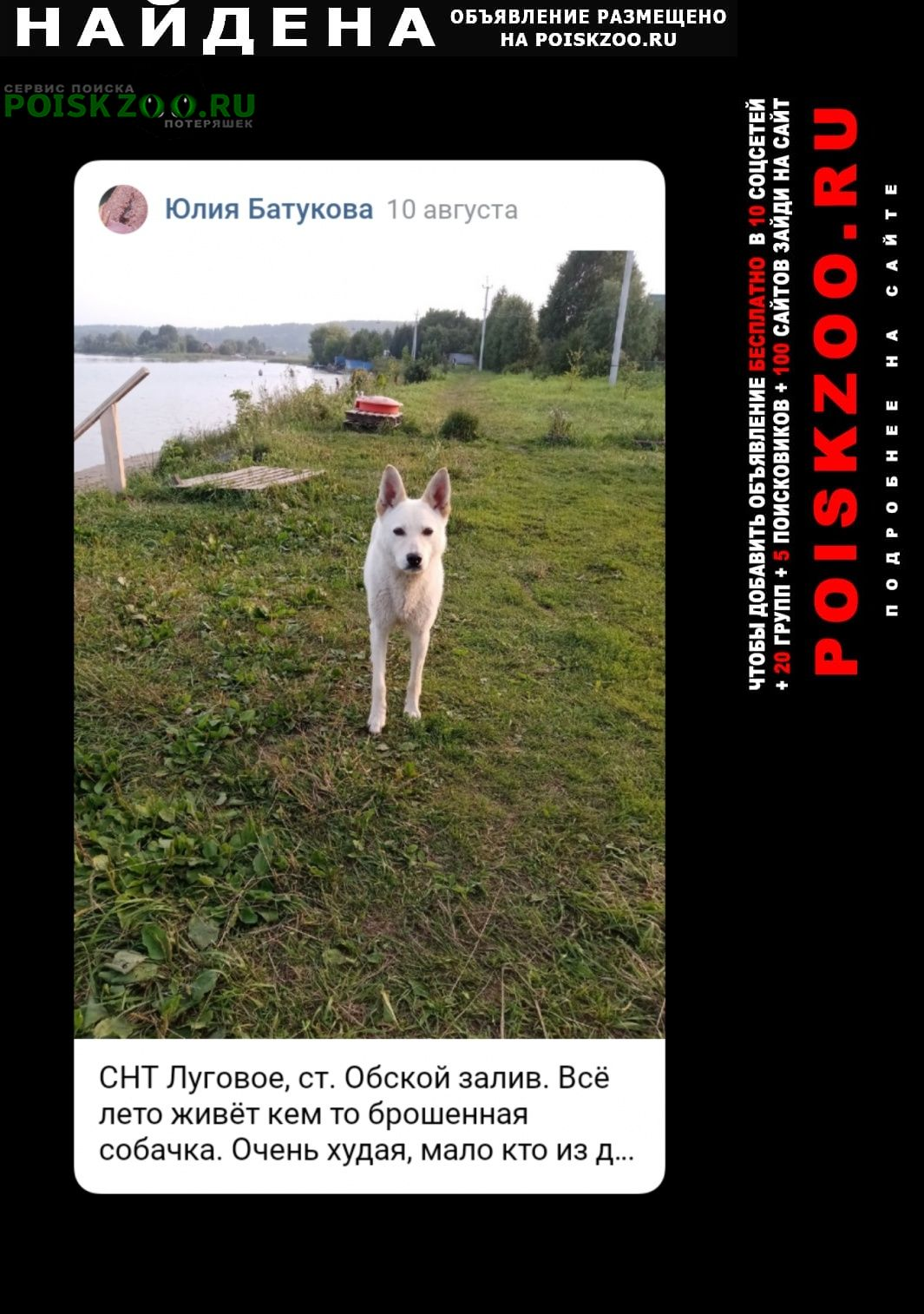 Найдена собака Искитим
