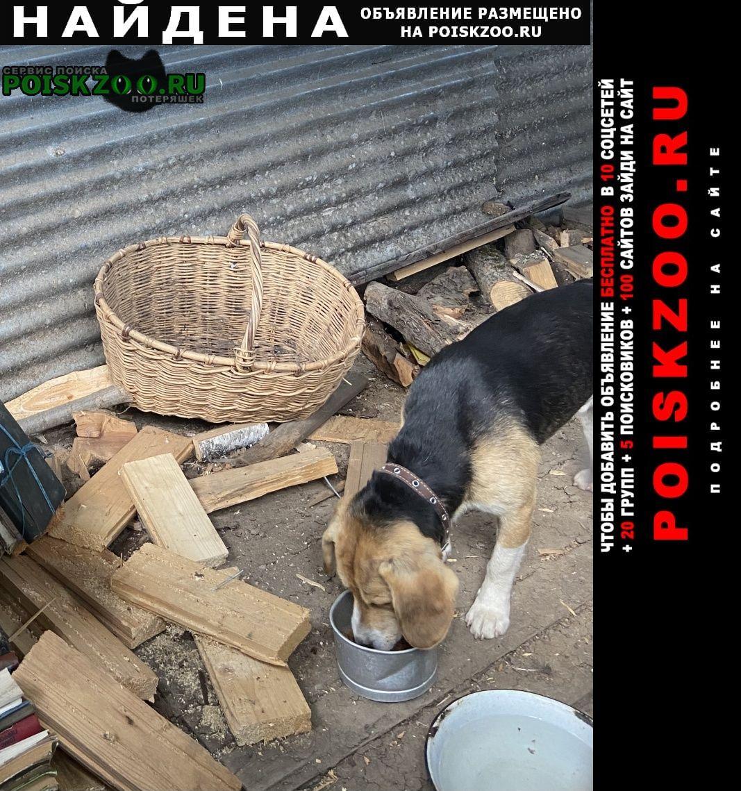 Найдена собака кобель предположительно бигль Солнечногорск