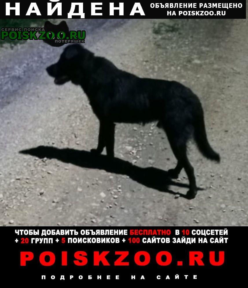 Найдена собака кобель черный (что-то от лабрадора) Липецк