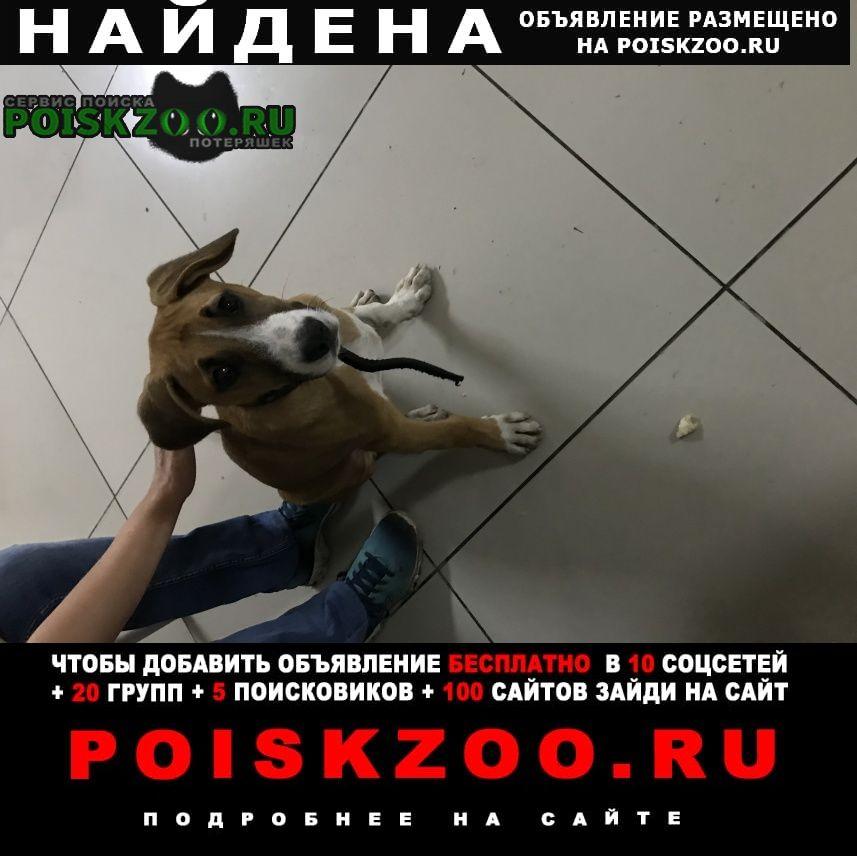 Найдена собака кобель Кисловодск