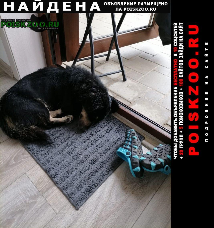 Найдена собака кобель Анапа
