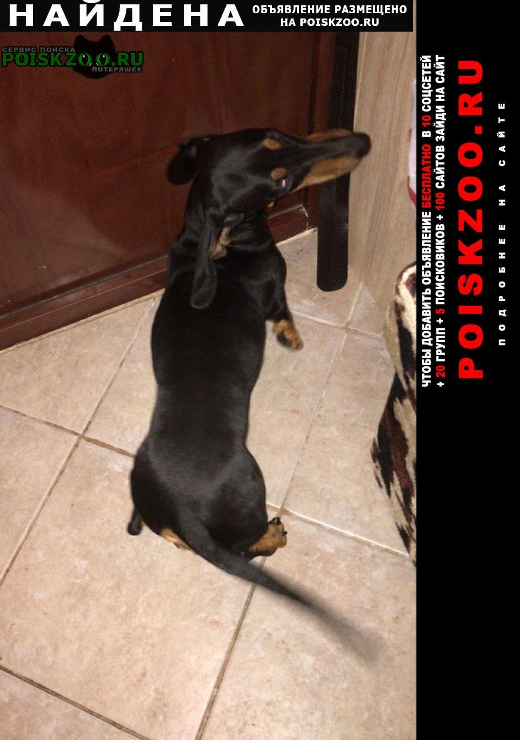 Найдена собака поселок санатория им.герцена Полушкино