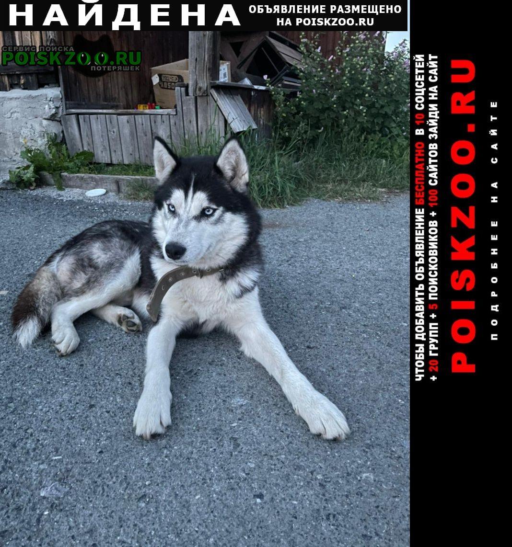 Найдена собака кобель Верхняя Пышма