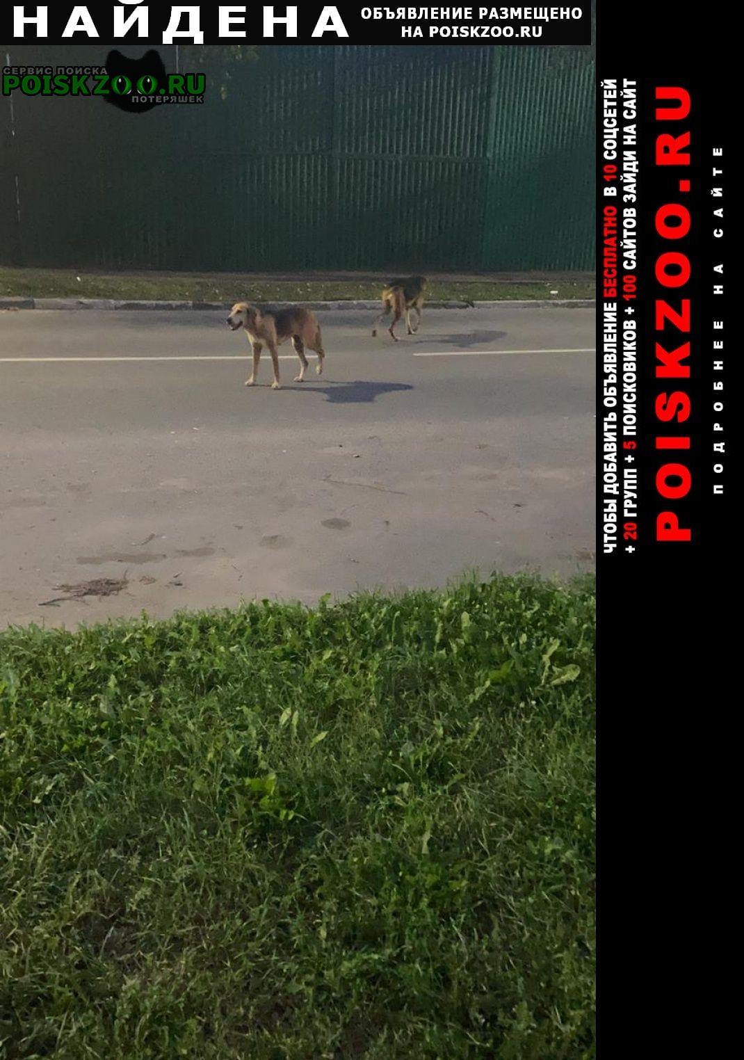 Найдена собака две собаки, самец и самка Реутов