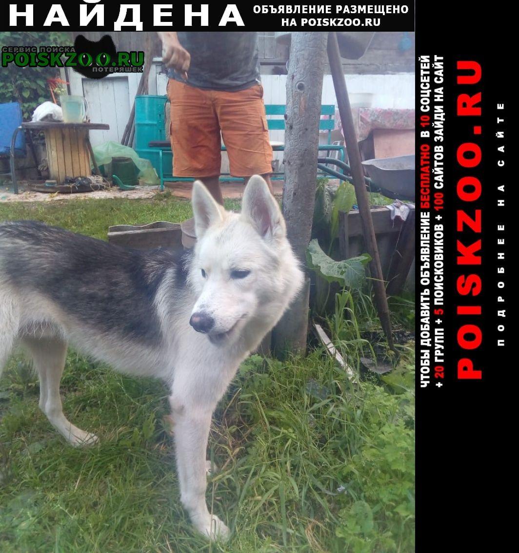 Найдена собака кобель молодой кабель, высокий, похож на лайку Красноярск