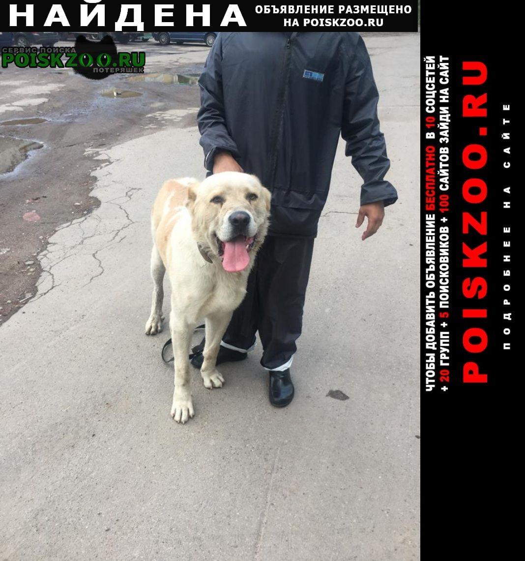 Найдена собака кобель азиат Санкт-Петербург