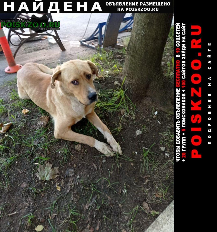 Найдена собака кобель помогите потеряшке Москва