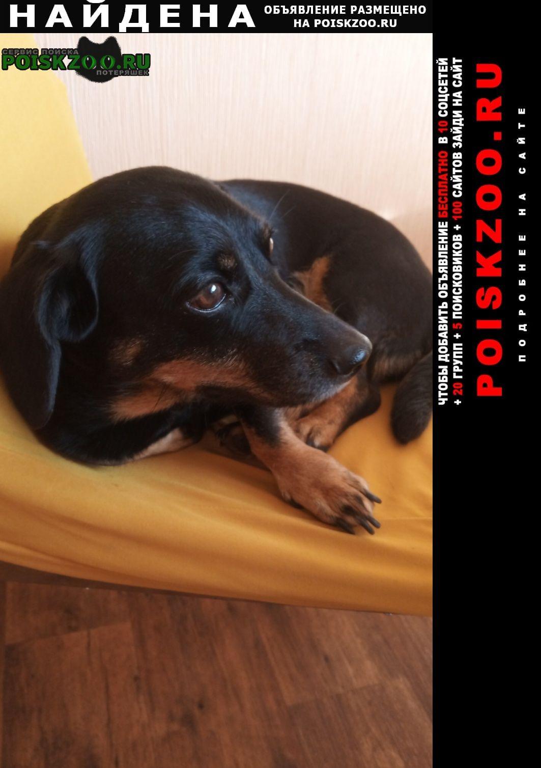 Найдена собака такса Челябинск