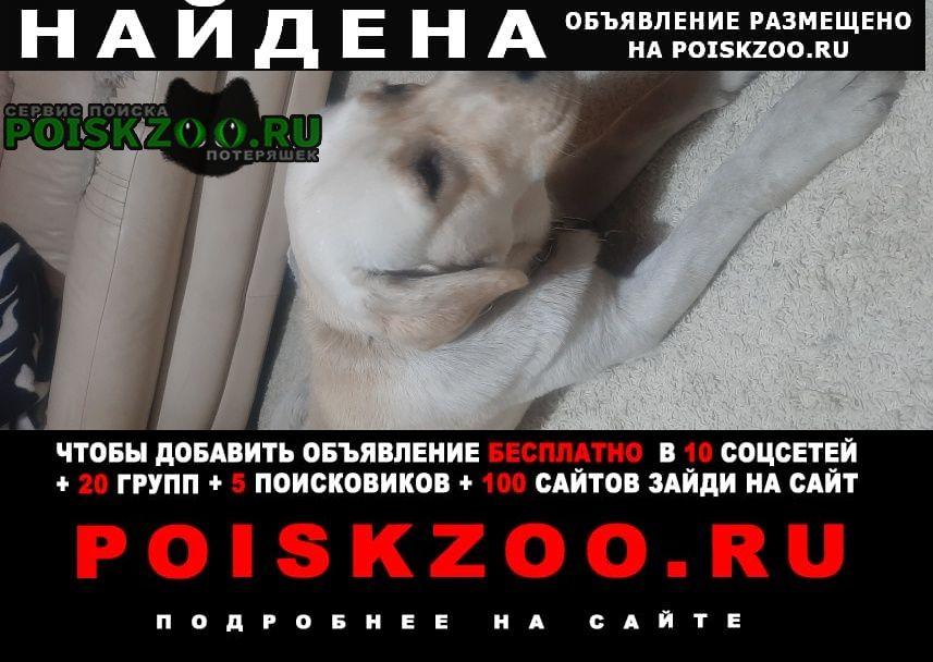 Найдена собака кобель ищем хозяина Вороново