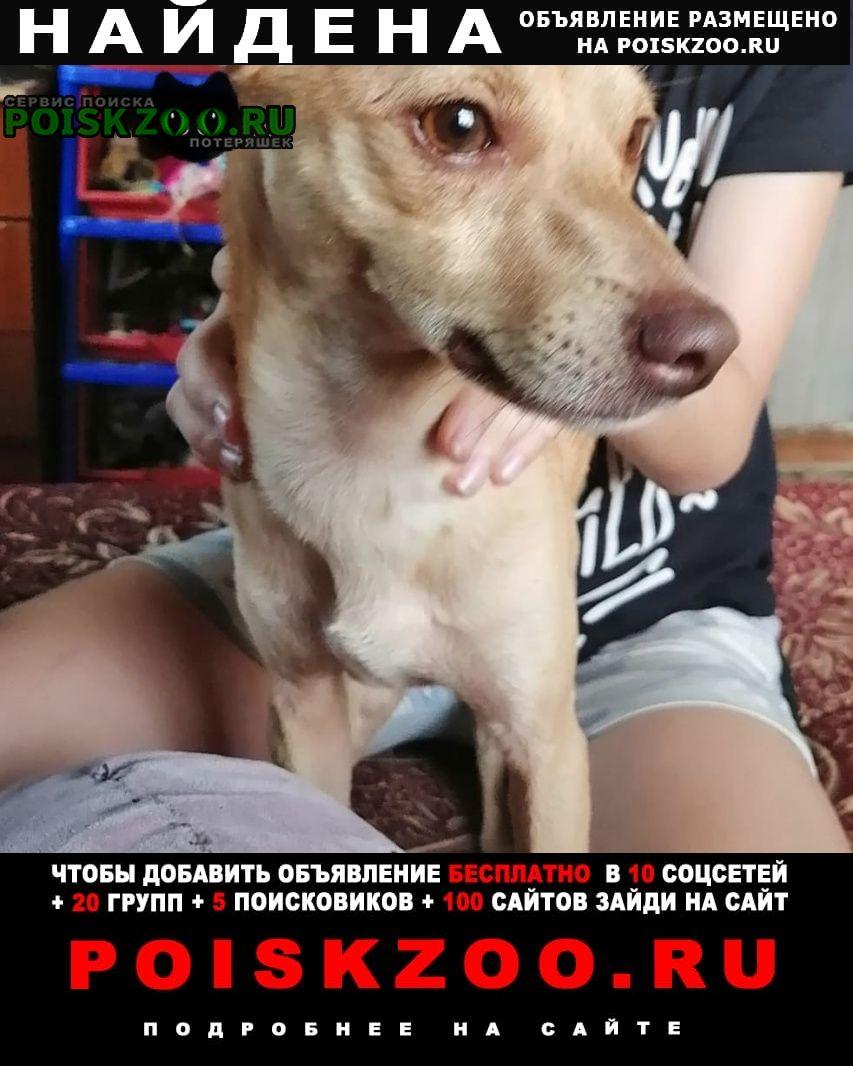 Найдена собака кобель похоже на той-терьера Хабаровск