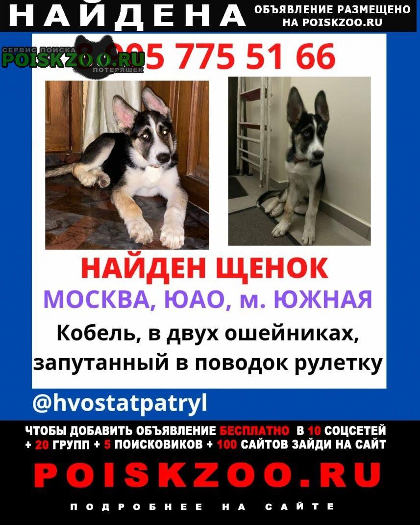 Найдена собака подросток Москва