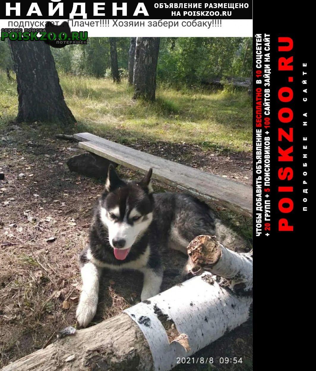 Найдена собака помогите псу Прокопьевск
