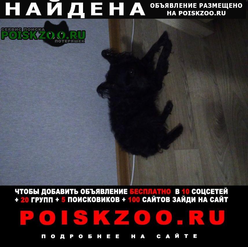 Найдена собака окрас черный похожа на болонку Москва