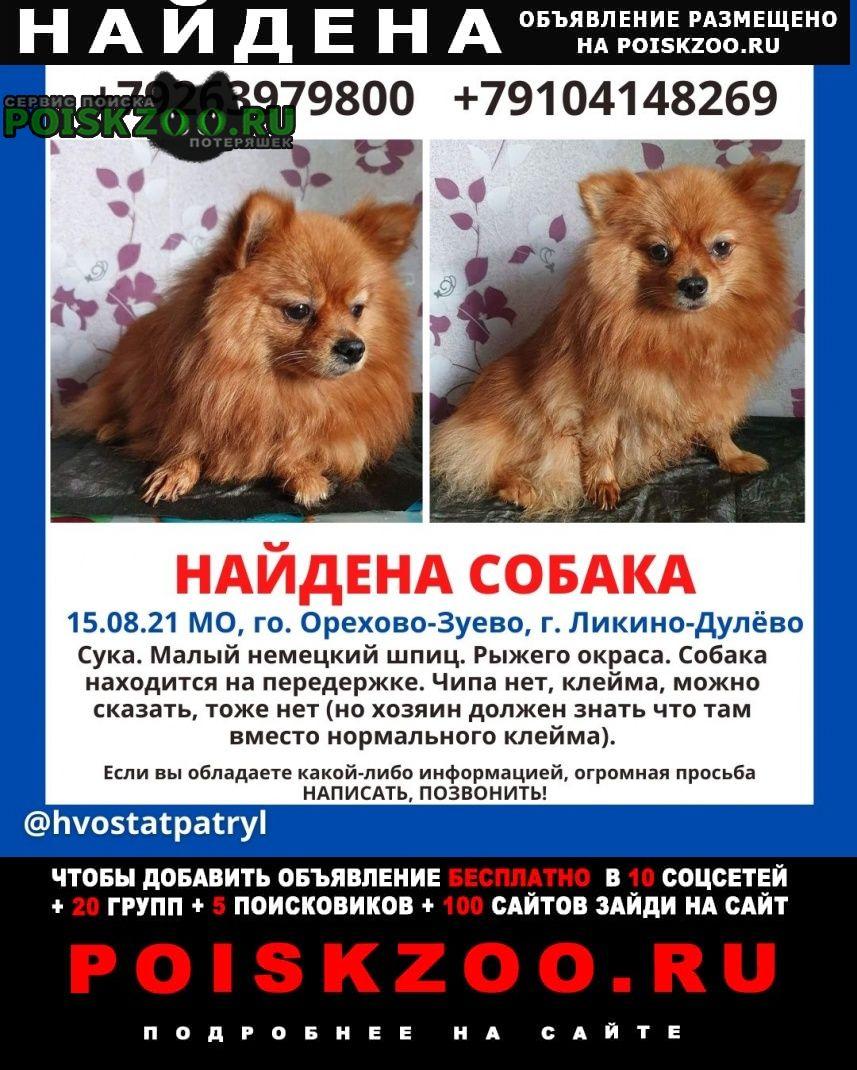 Найдена собака Ликино-Дулево