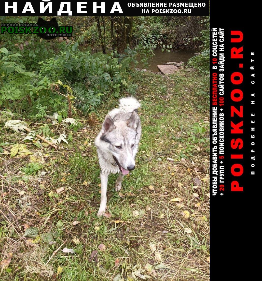 Найдена собака кобель лайка, Красноярск