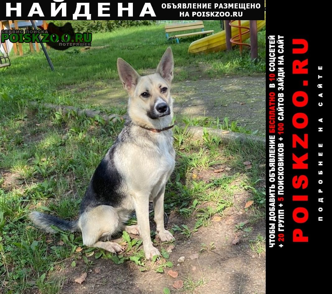 Найдена собака метис овчарки Мытищи