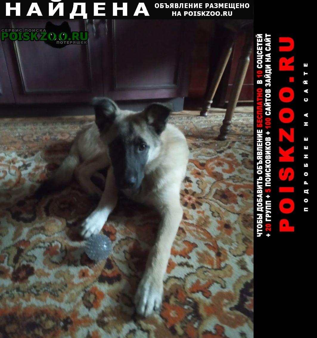 Найдена собака кобель щенок Москва