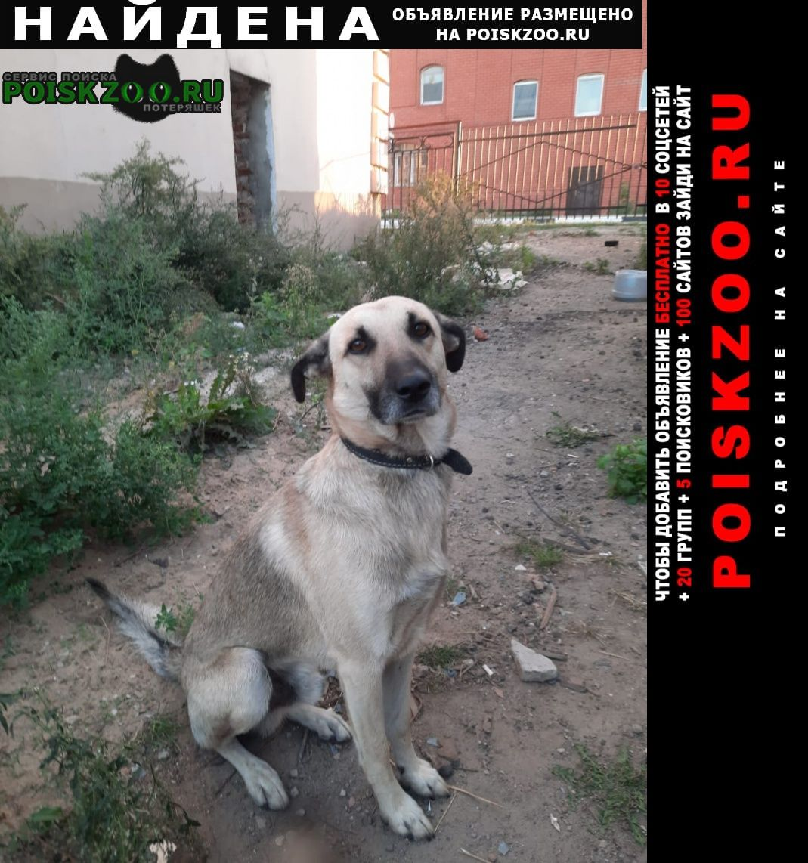 Найдена собака кобель Нижний Новгород