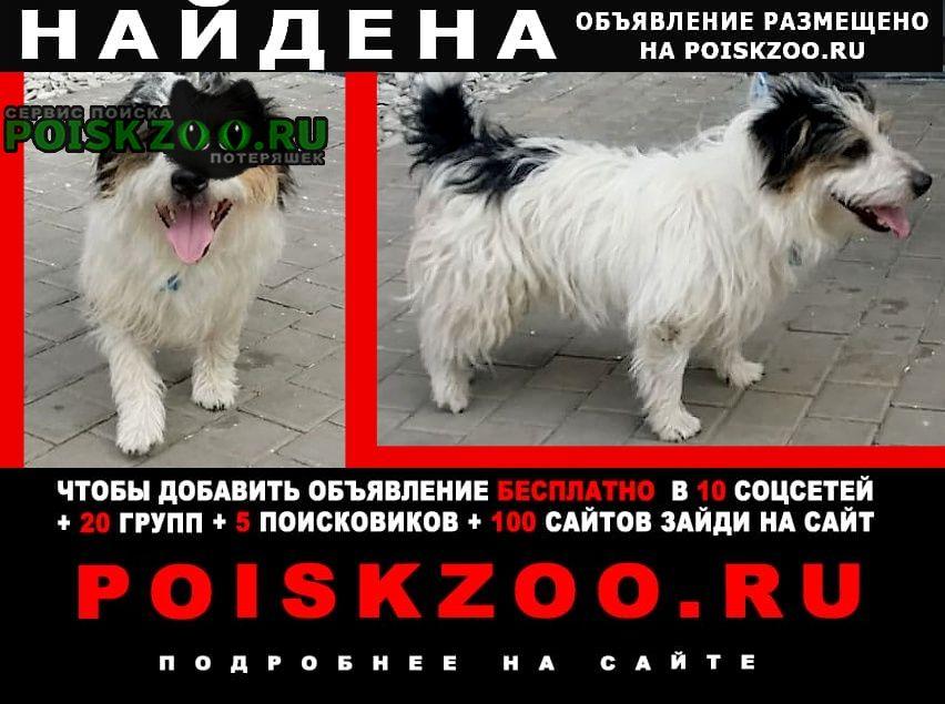 Найдена собака кобель, похож на терьера, 10 кг Видное