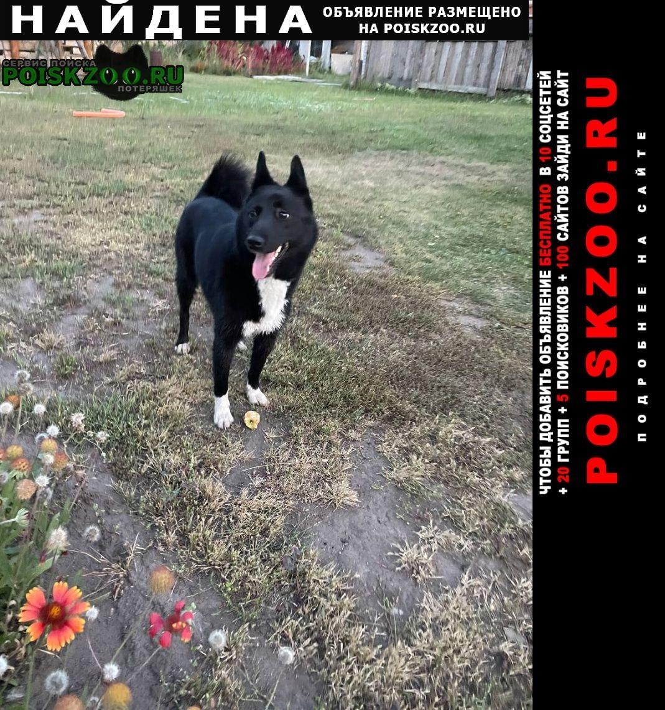 Найдена собака Ульяновск