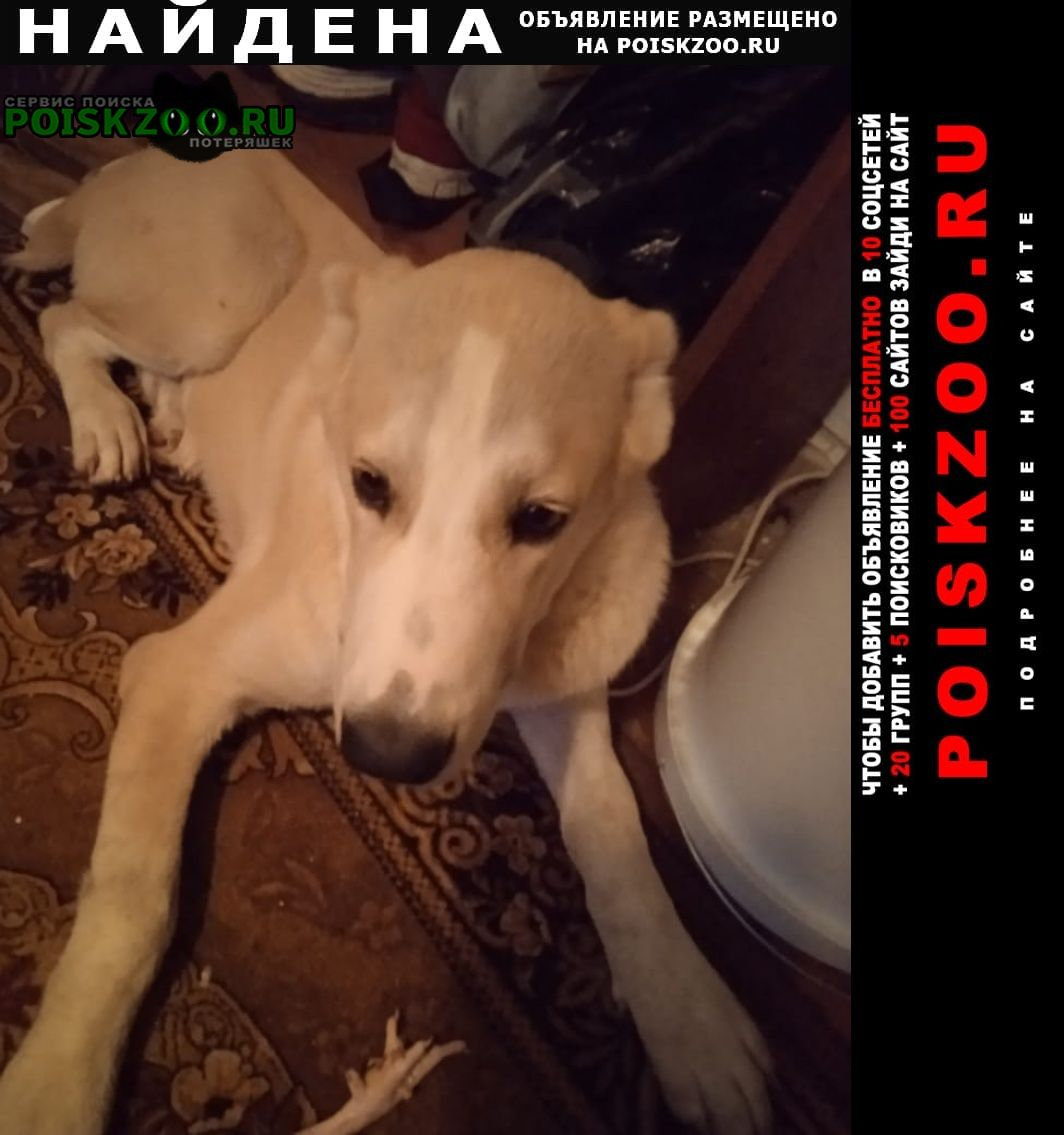 Найдена собака кобель Алушта