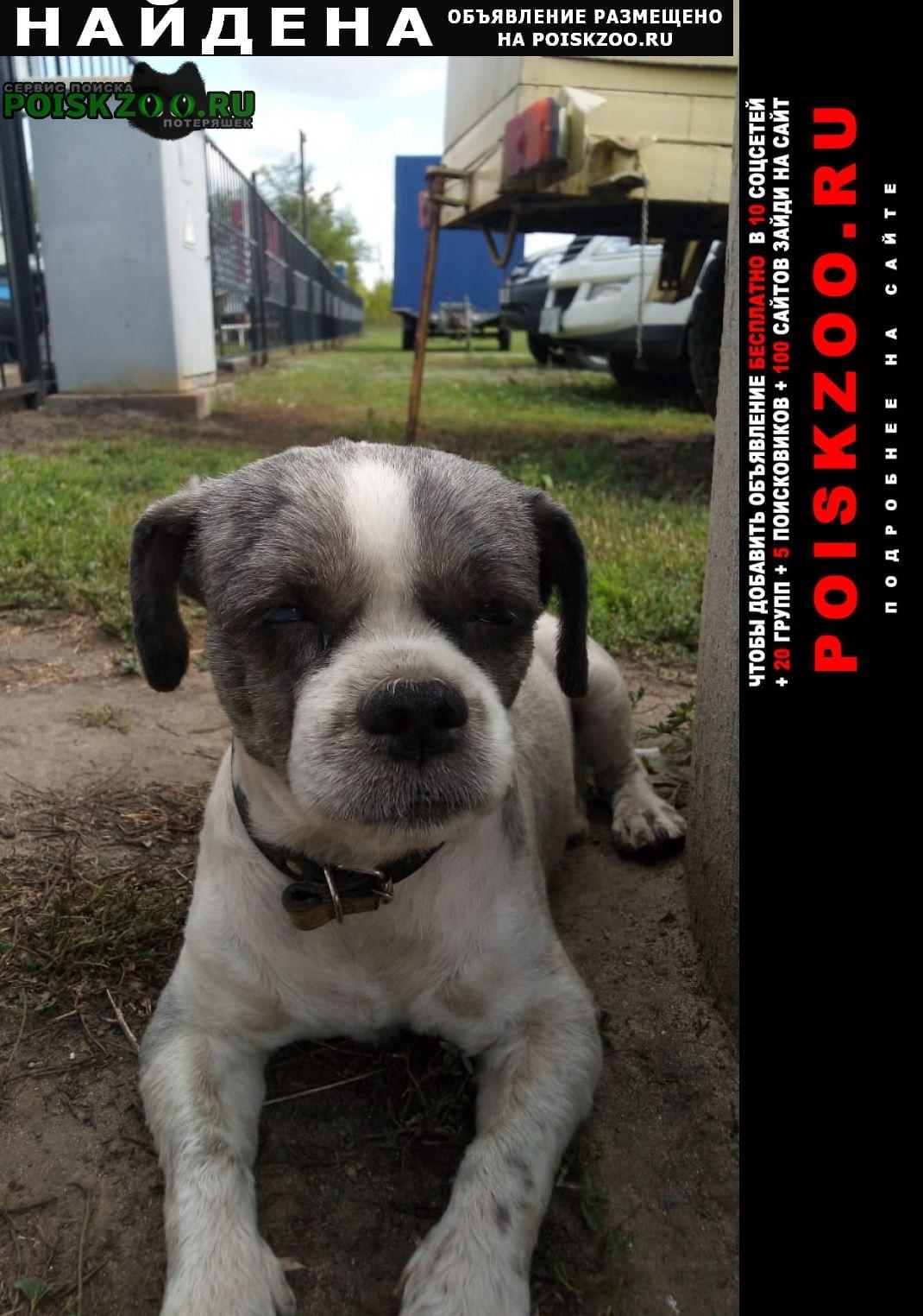 Найдена собака кобель Борисоглебск