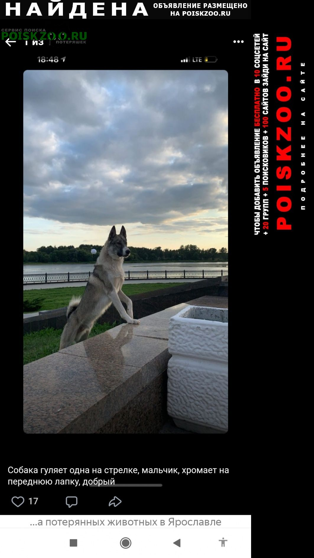 Найдена собака кобель п с на стрелке. молодой, добрый, Ярославль