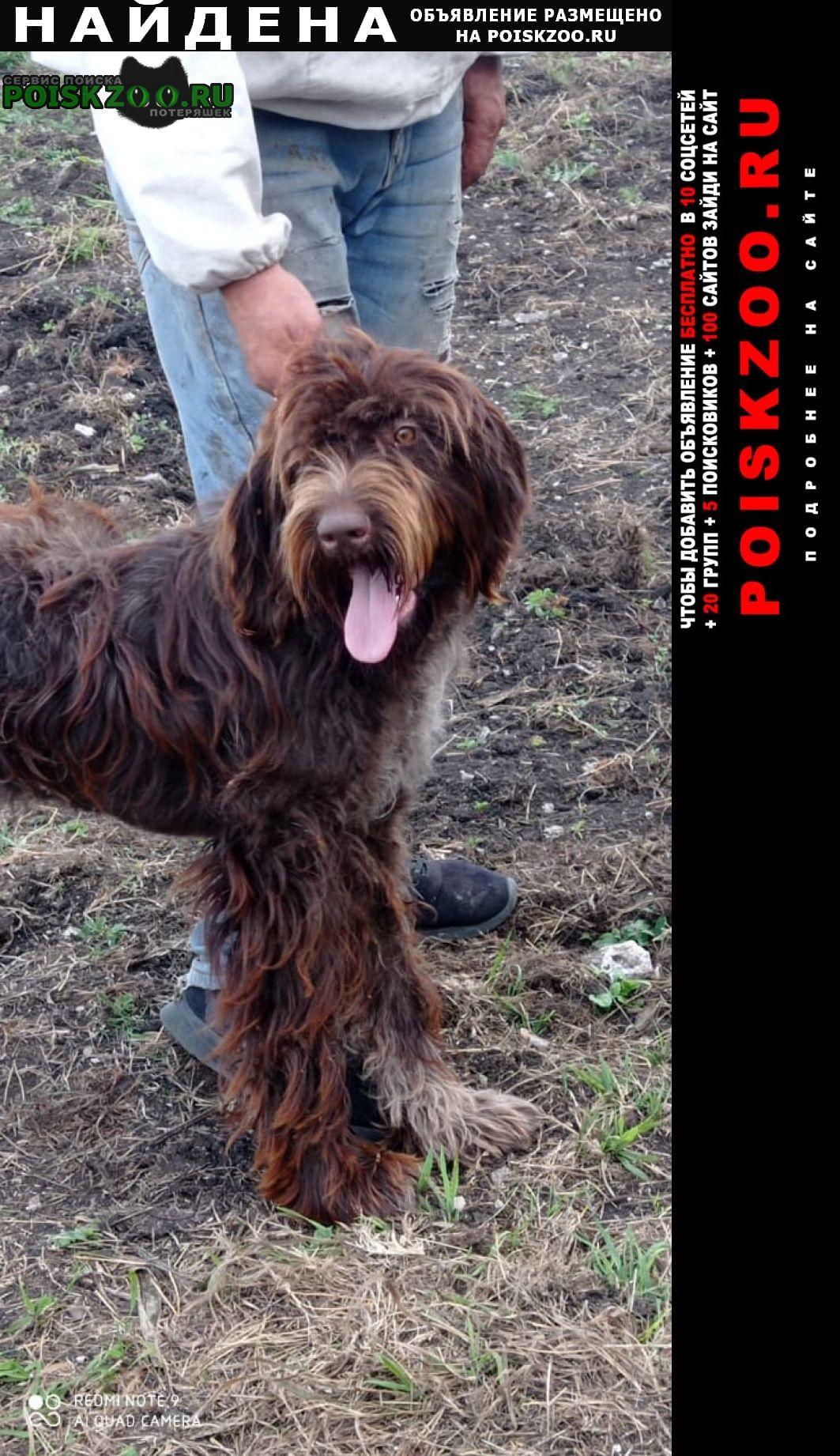 Найдена собака около месяца назад Пятигорск